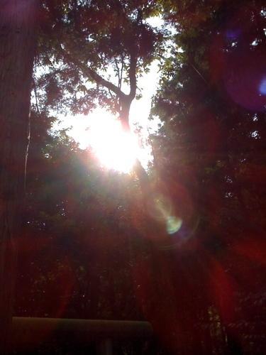 真名井神社 2008年10月25日