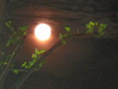 ウエサクの満月 2011年5月17日
