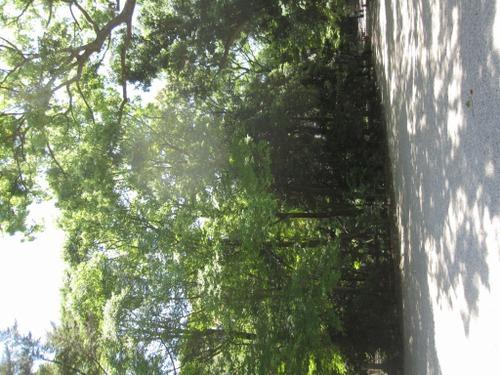 下鴨神社 2011年5月18日