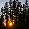 森に沈む夕陽