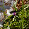 雪の下でも咲いて 2011.10.11