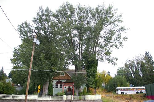 大きな木に囲まれた家