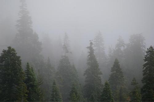 霧の中、幻想的ですね